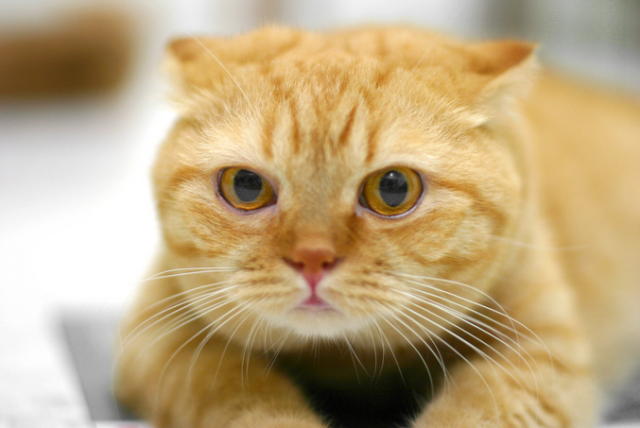 amazed cat