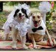dog wedding