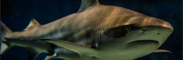What Shark Tank Can Teach You